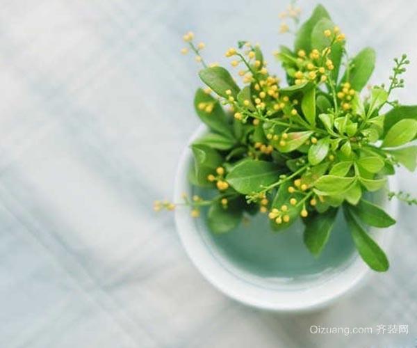 家中养花应该如何施肥