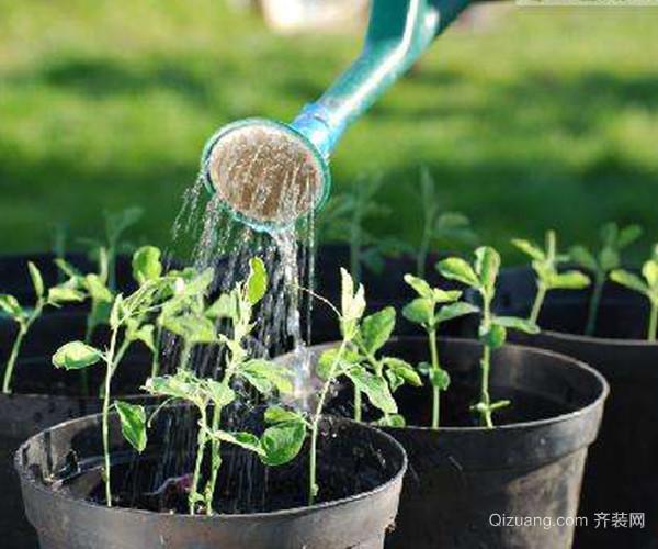 养殖花卉应该如何护理