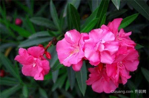 常见的有毒植物有哪些