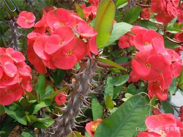 有毒植物有哪些
