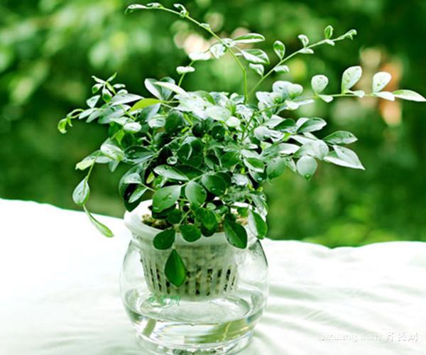 养殖花卉需要注意哪些