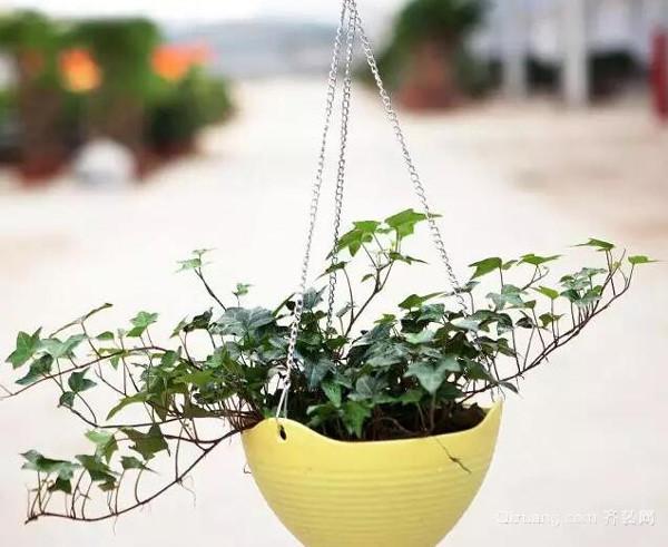 适合种在室内的植物有哪些