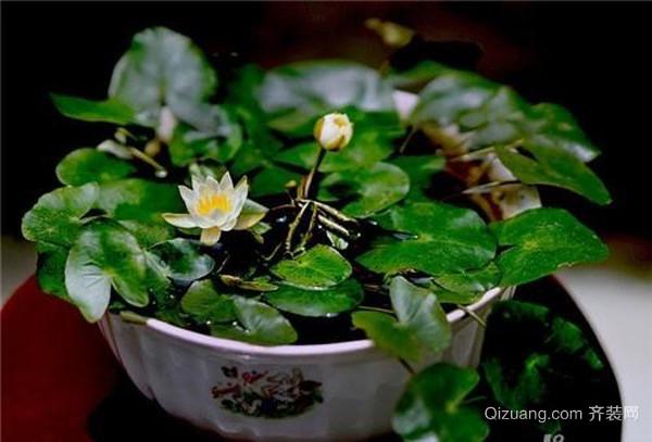 植物不开花的处理方法