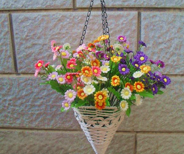 花卉吊兰都有哪些