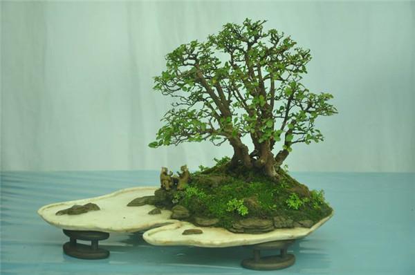 微型盆栽植物怎么做好