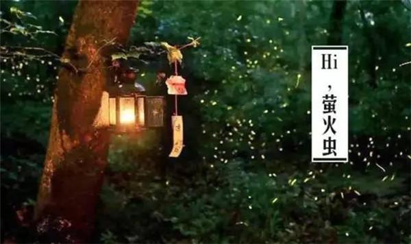 常州环球港萤火虫魔幻森林开启 来抢免费门票