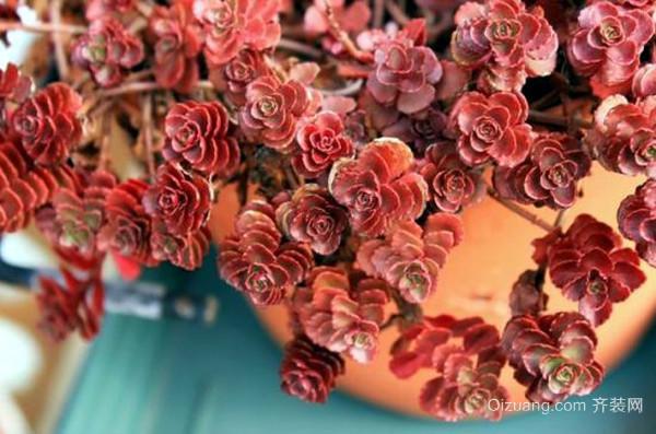 小球玫瑰常见的养护方法