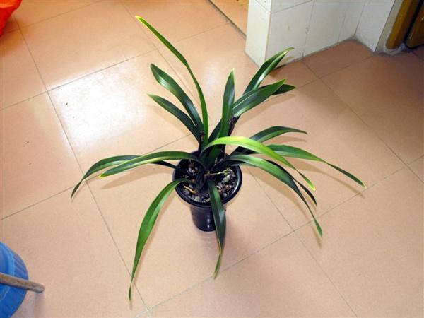 植物老不开花问题出在哪