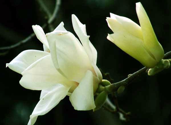 花卉晒太阳有哪些误区