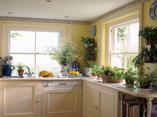 厨房摆放植物