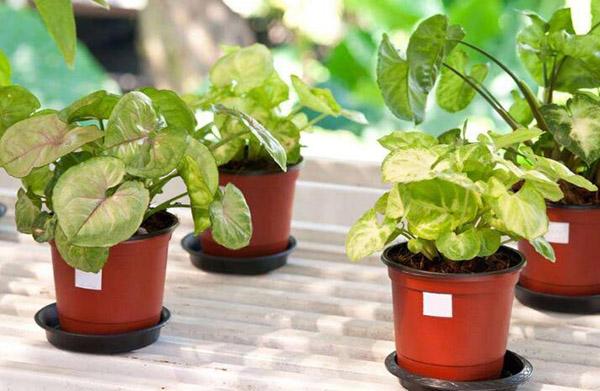 秋季室内干燥缓解方法