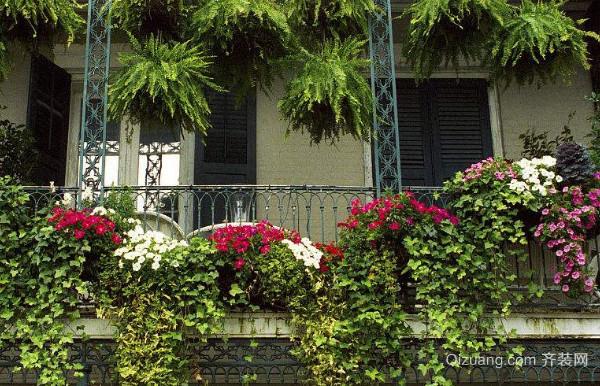 阳台上的植物要怎么管理