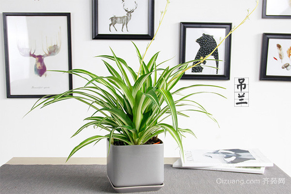 卫生间风水植物