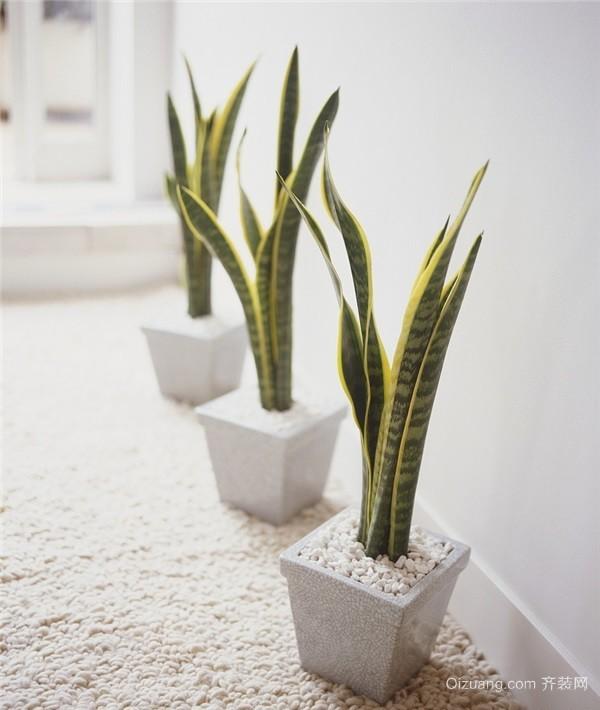 化解卫生间不良风水的植物