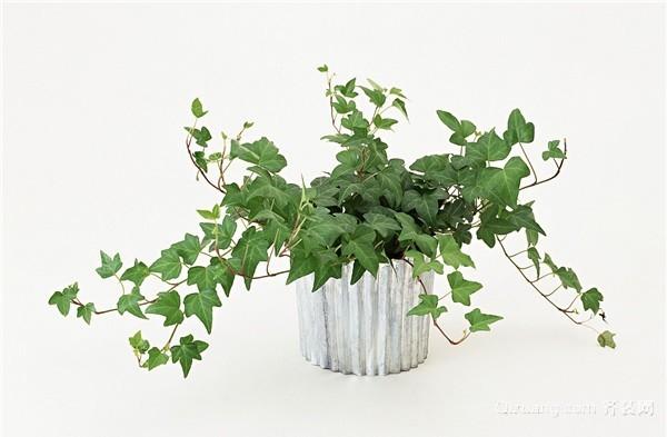化解不良风水的植物