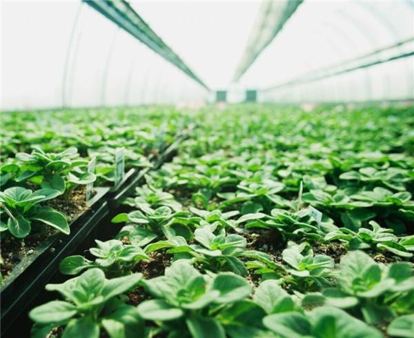 新栽苗木应该如何养护 常见的方法有哪些
