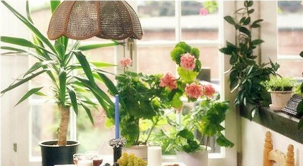 鲜花放家里好吗 大理装饰分享鲜花室内摆放八大原则