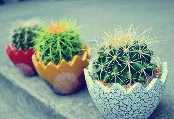 防辐射植物推荐