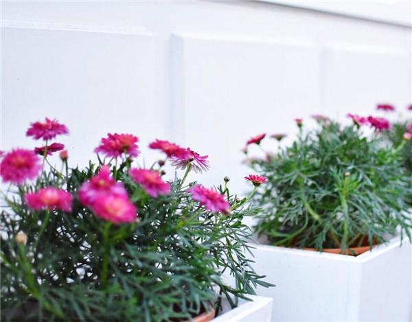 花卉盆栽怎么越冬