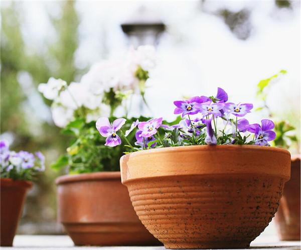 花卉盆栽越冬