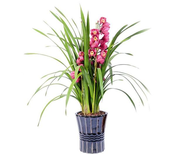 冬季也能盛开的花卉有哪些 一起来看看