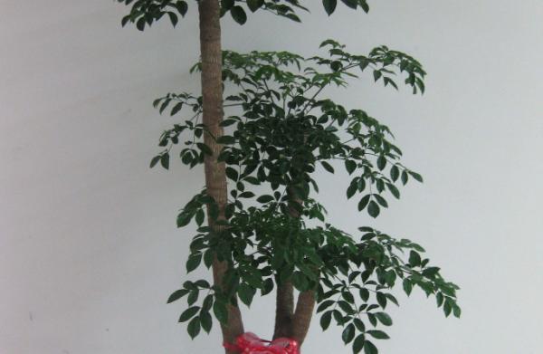 养殖幸福树的要点 让家庭生活幸福感爆棚