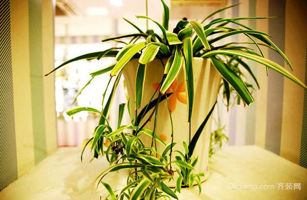 新装修的房子放应该放的植物