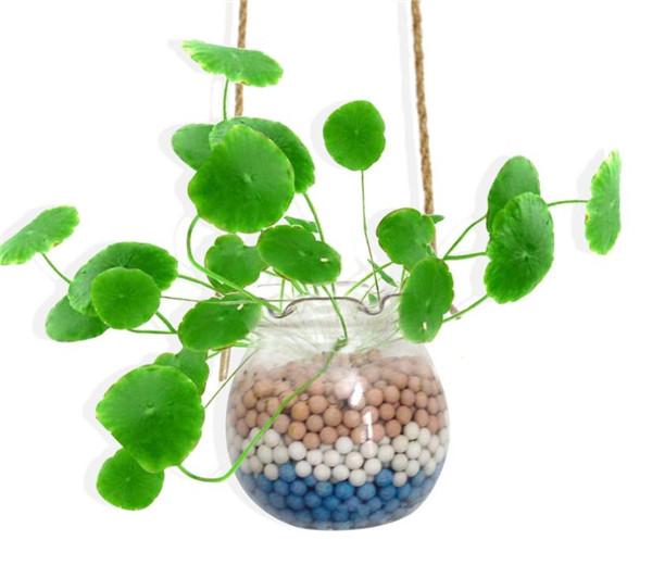 水培植物怎么过冬 常见的方法有哪些呢