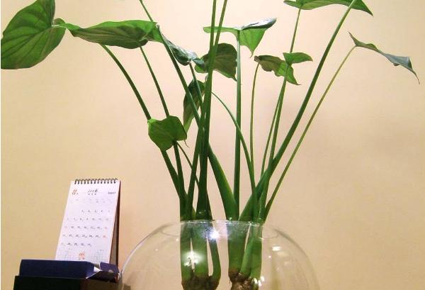 水培植物怎么换水