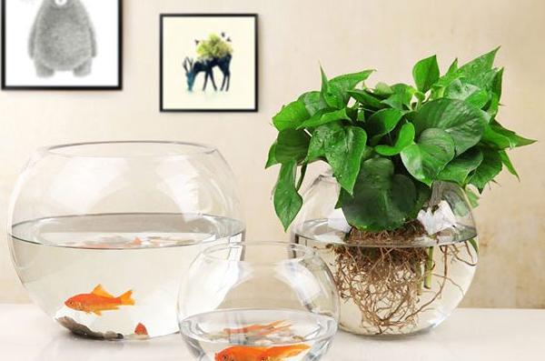 水培植物换水的技巧