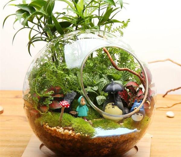 多肉植物怎么水培