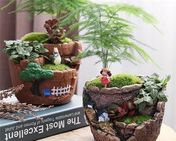 多肉植物水培