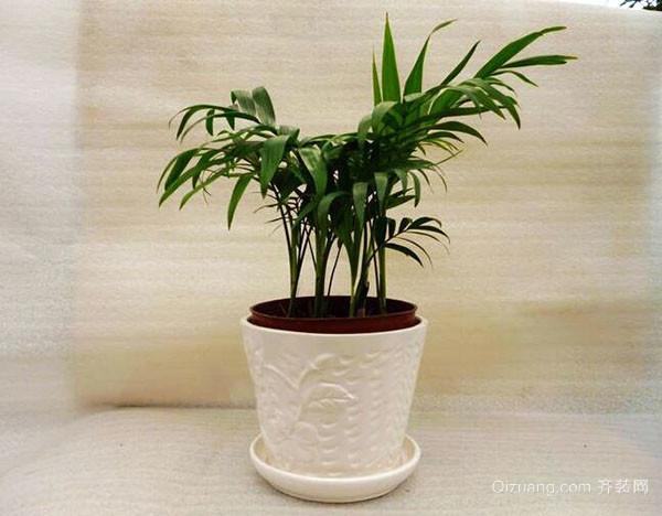 袖珍椰子树怎么养殖 有哪些注意事项
