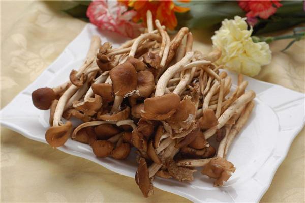 茶树菇是什么