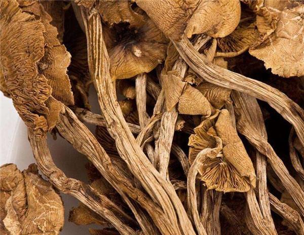 茶树菇是什么 其有哪些价值和作用呢