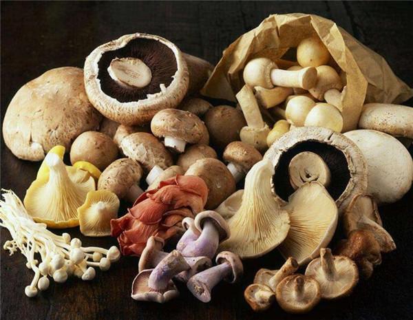 食用菌种类