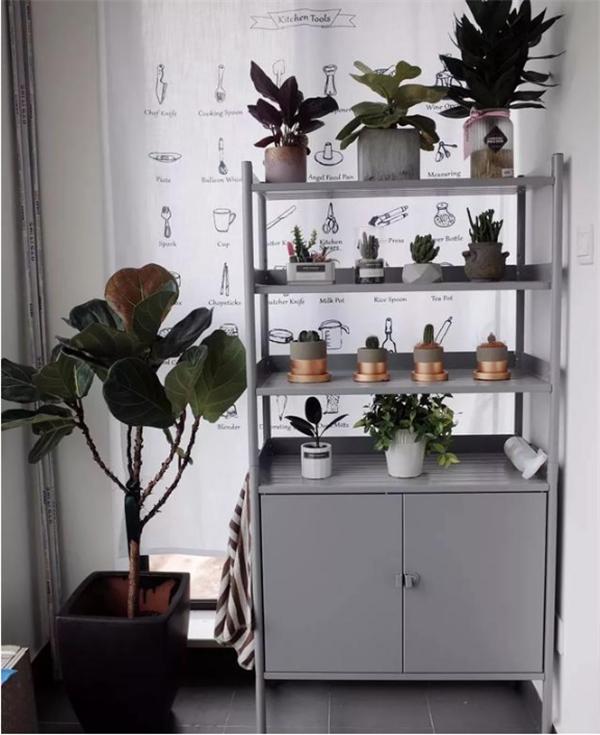 阳台怎么设计好,植物上墙不占空还漂亮!