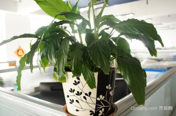 办公室植物