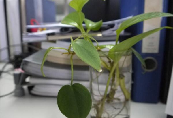 办公室植物风水禁忌
