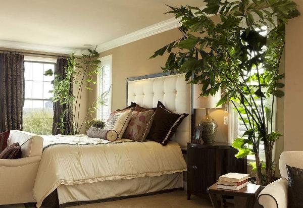 卧室植物摆放风水