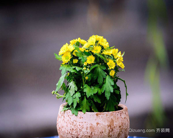 卫生间除异味植物