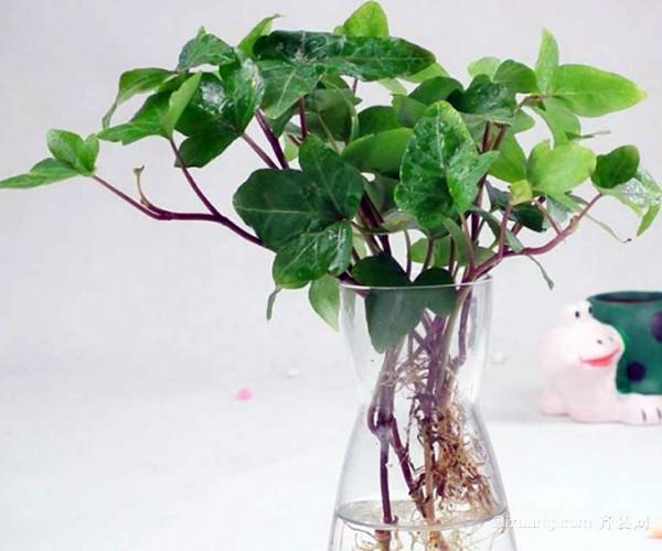 水培植物营养液
