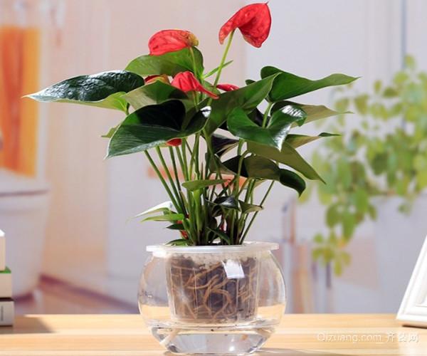 水培植物多久换一次水