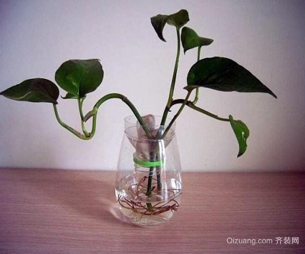 水培植物的养殖方法