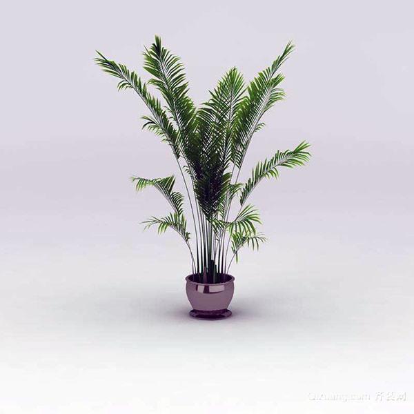 喜阴室内大型盆栽植物 为你详细列举