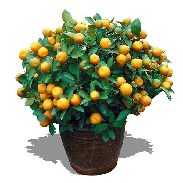 八種植物招財又旺宅
