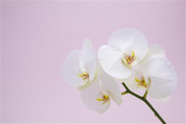 大理装饰公司分享蝴蝶兰的正确养殖方法