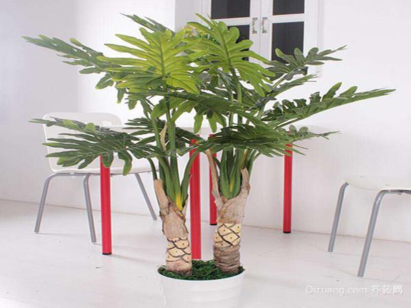 客厅摆放什么植物最好