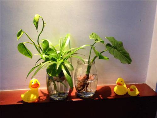 你家的小仙女喜欢在卧室放什么花呢?