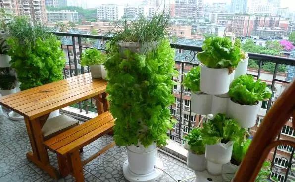 家庭阳台花园设计.jpg